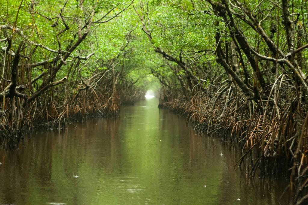 everglades_mangrove